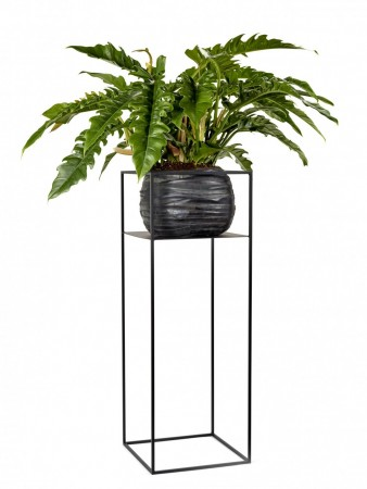 Serax - Plant Display Rack / L